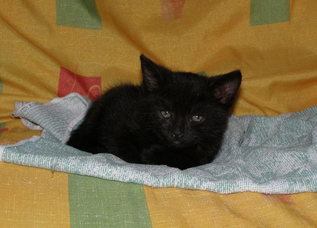 Koťata-Bubu1