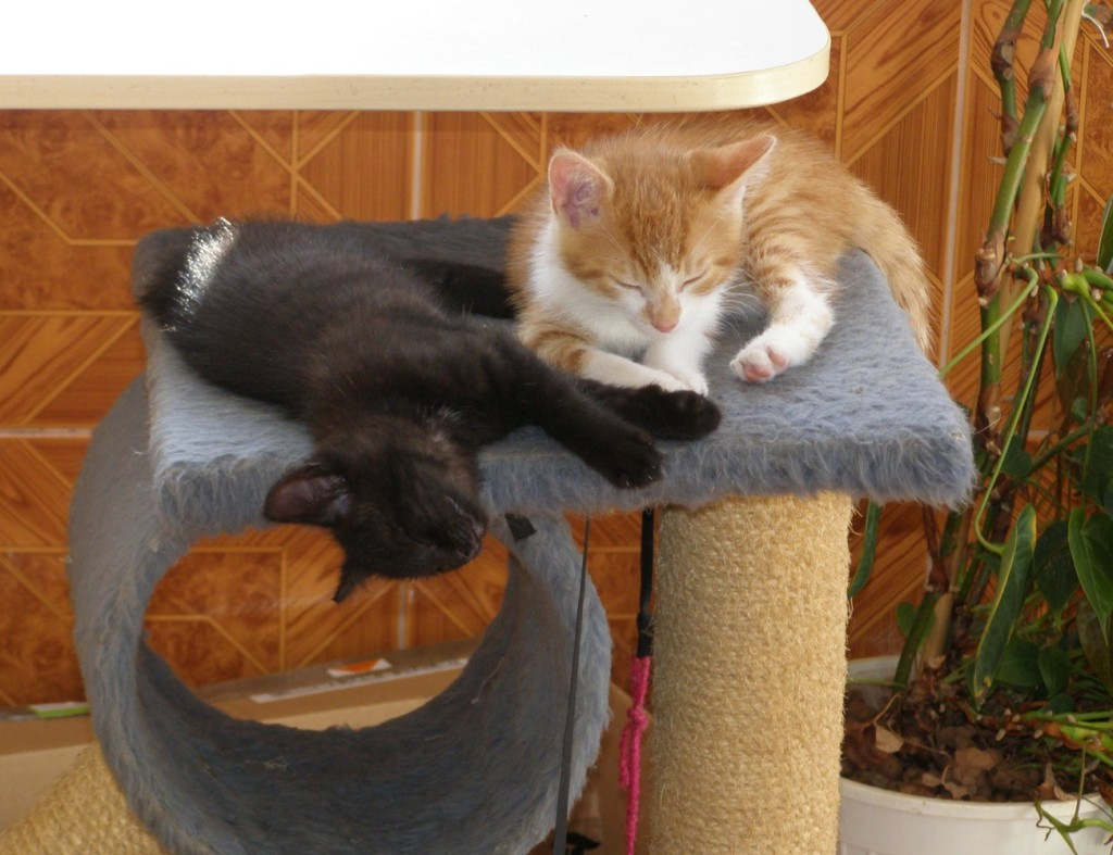 Koťata-Max a Bubu1