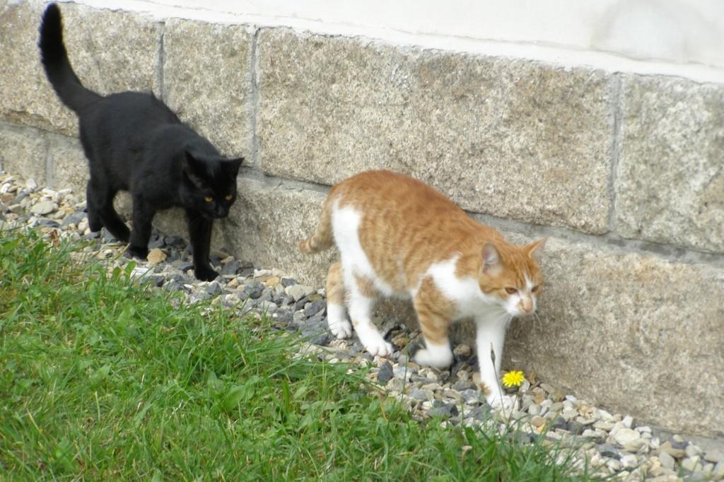 Koťata-Max a Bubu2