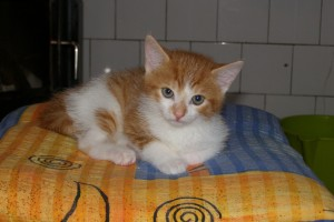 Koťata-Max1